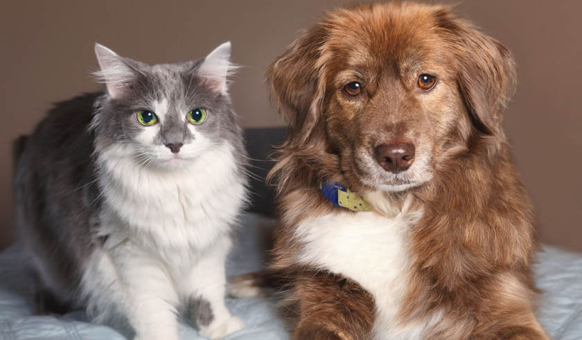 Is Pet Insurance Worth It & How Does It Work?