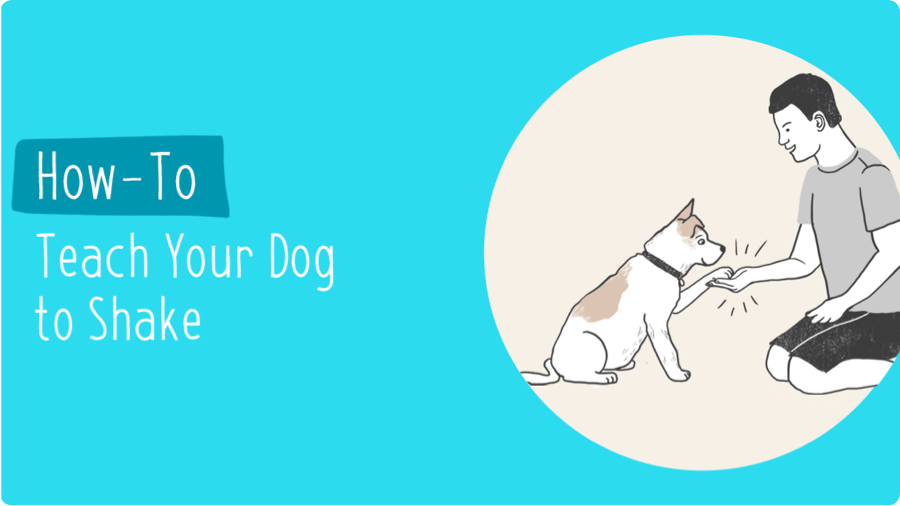 How-To Teach Your Dog to Shake