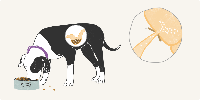 Illustrated dog eating food