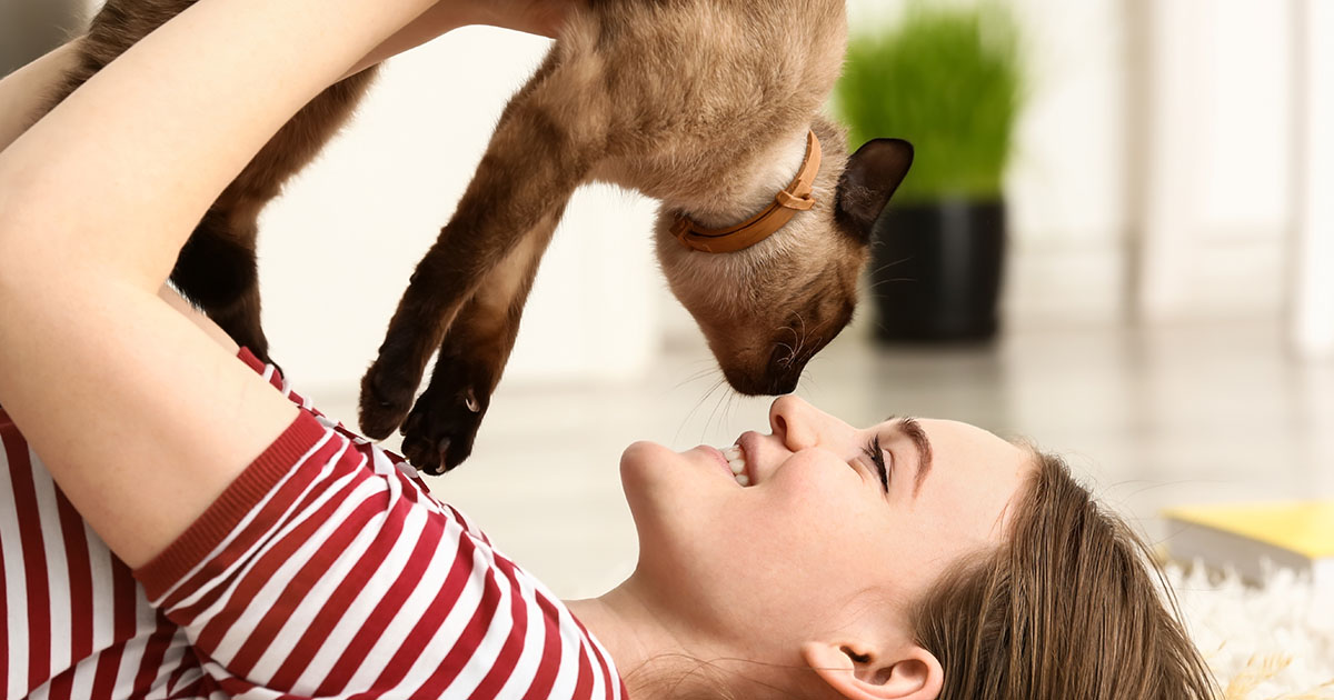 Don't Let Feline Leukemia Sneak Up on Your Cat