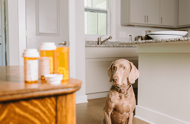 Human Medications That Aren't Safe for Dogs