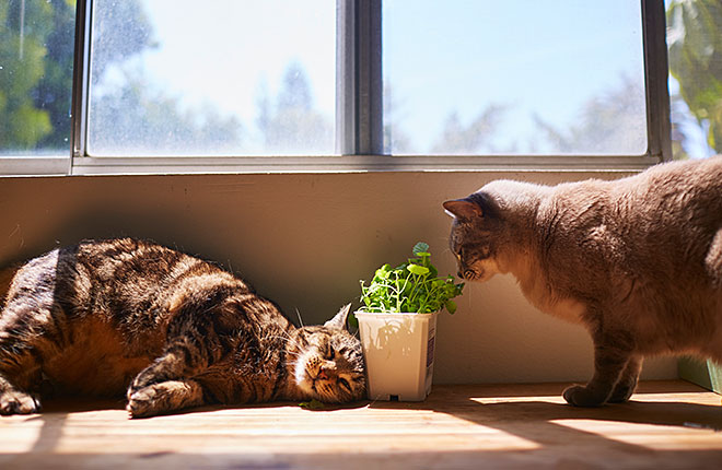 Cat Friendly Plants (and Which Ones to Avoid)