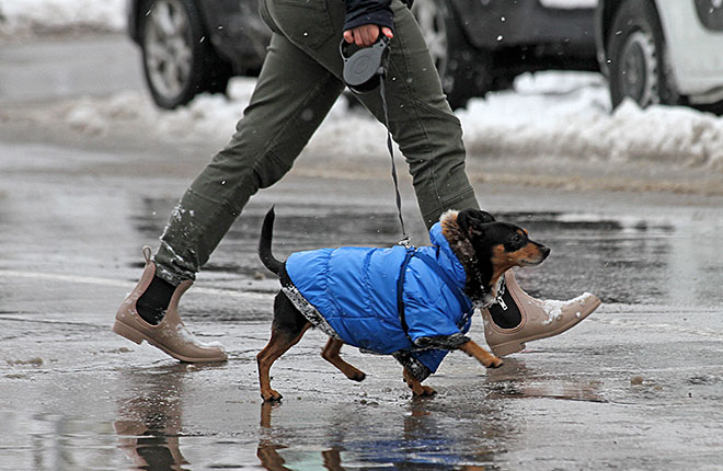 Why Your Dog Still Needs Tick & Flea Protection During the Winter