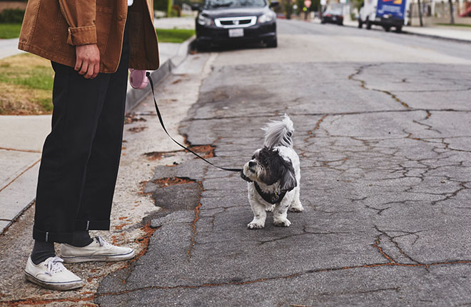 Is Your Dog Limping? Lagging Behind or Uncomfortable?