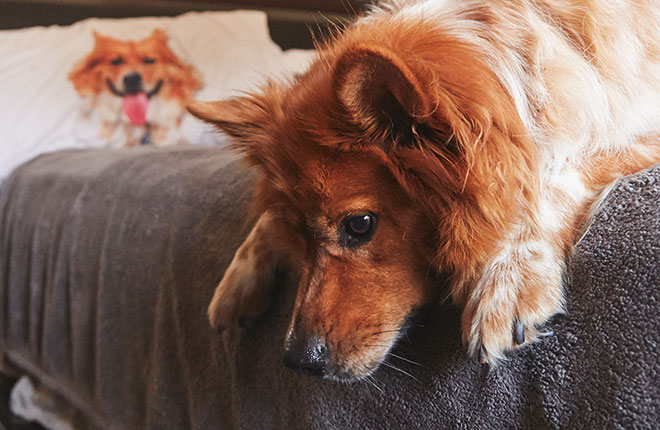 How Your Dog Is Telling You They're in Pain
