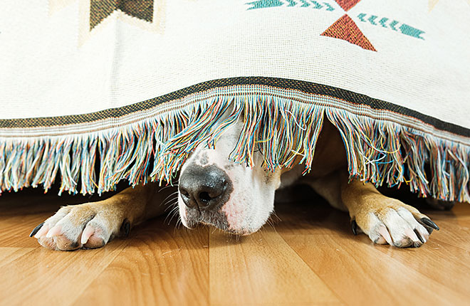 My Dog is Scared of Noises — What Can I Do?