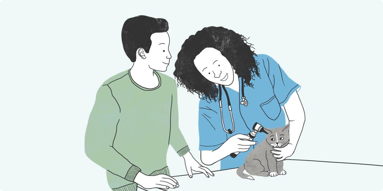 veterinarian checking kitten