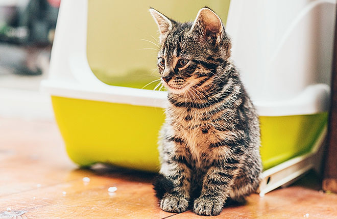 How to Create the Ultimate Litter Box Setup