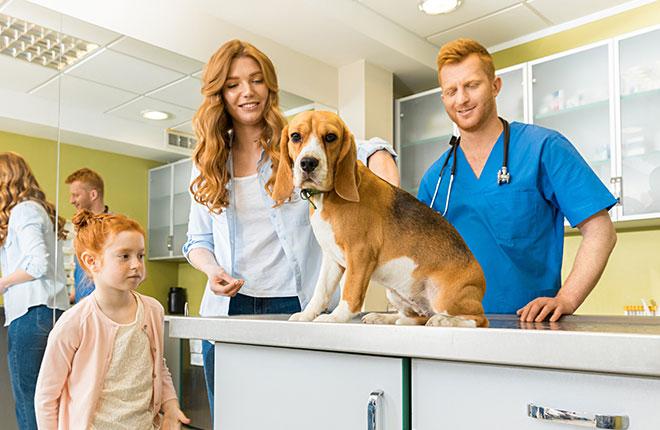 Your Pet's First Vet Visit Post-Adoption