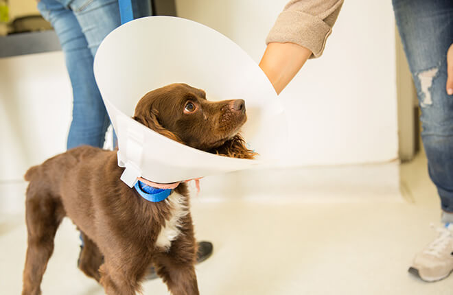 How to Treat Eye Infections in Dogs