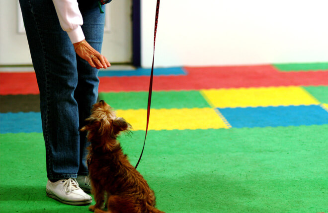 What to Expect at a Dog Training Class