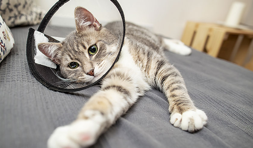 All About Cat Bites & Abscesses