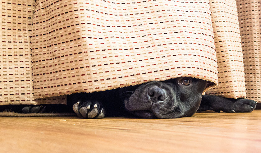Is your dog scared of fireworks? Here's what to do.