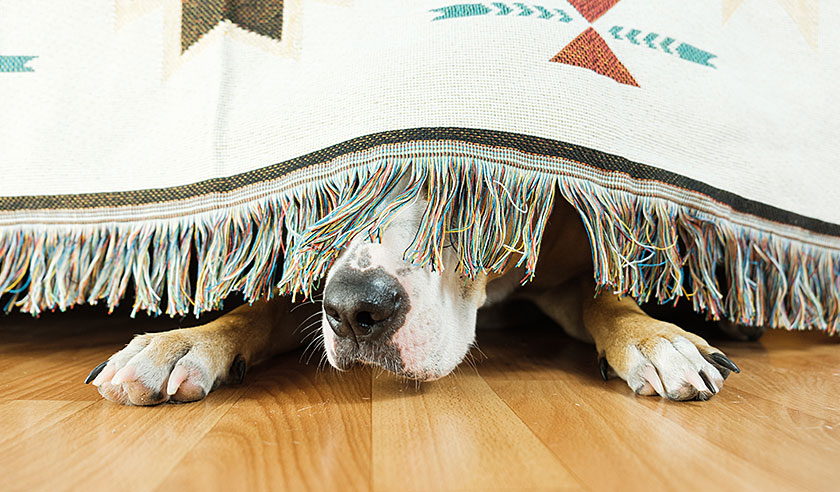 How to Create a Safe Haven for Your Dog