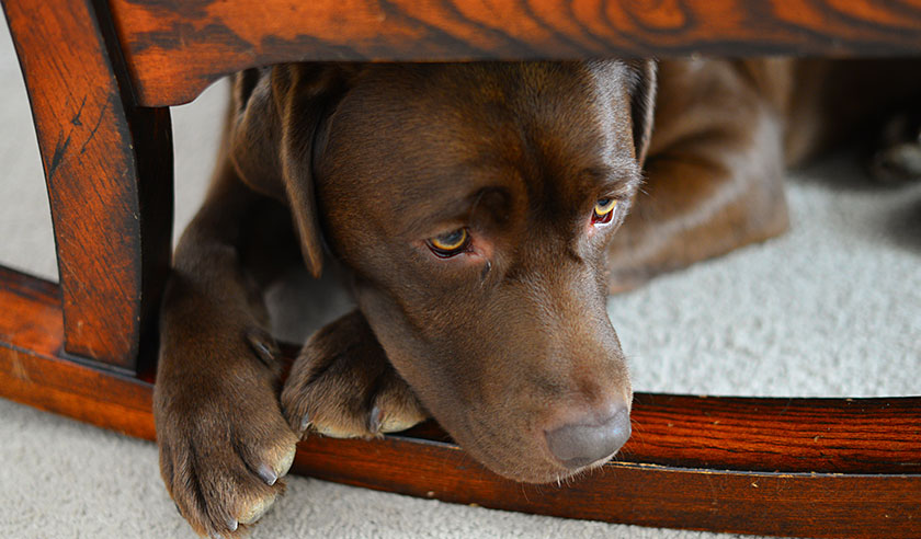 Managing your dog's thunder anxiety