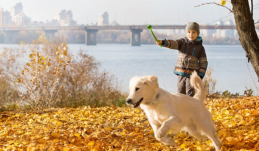 Fall Activities for You & Your Dog