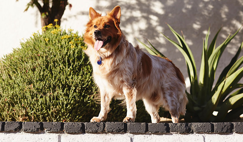 The Importance of Full-Year Heartworm Disease Protection for Your Dog