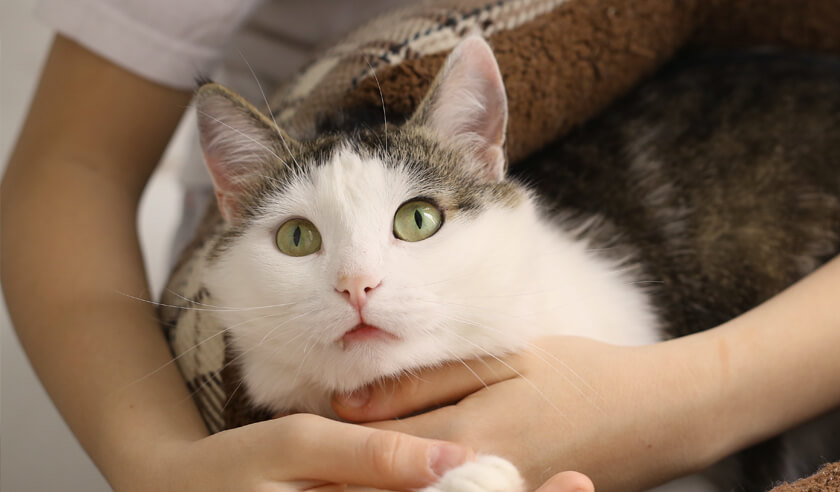 How to Make Your Arthritic Cat More Comfortable