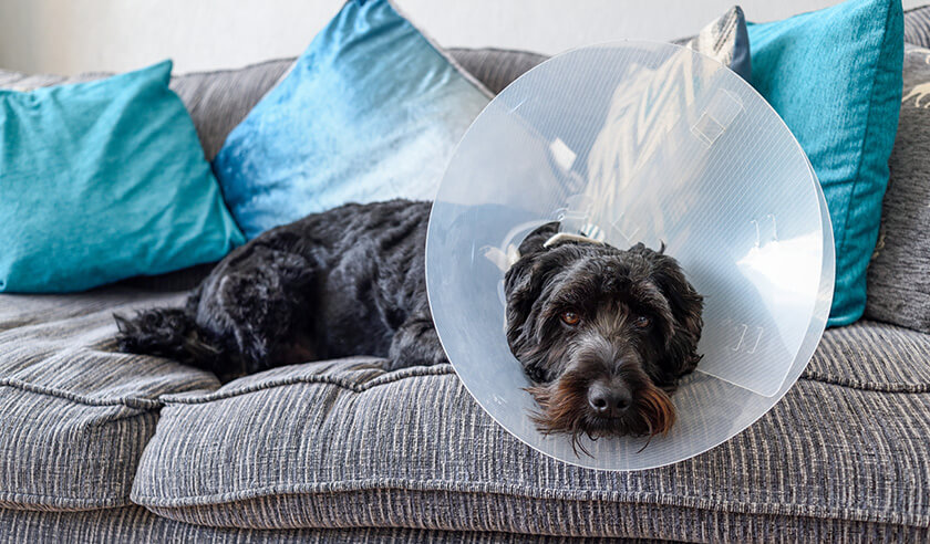 What to Expect After Your Pet is Spayed or Neutered