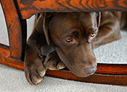 <p>Managing Your Dog&rsquo;s Thunder Anxiety</p>