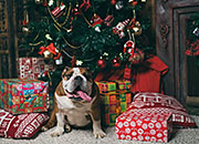 <p>Holiday Pet Safety Tips</p>