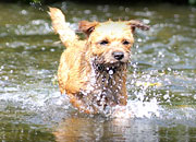 <p>Know the leptospirosis risk in your area</p>