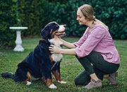 <p>Prevent Heartworm Disease in Dogs</p>