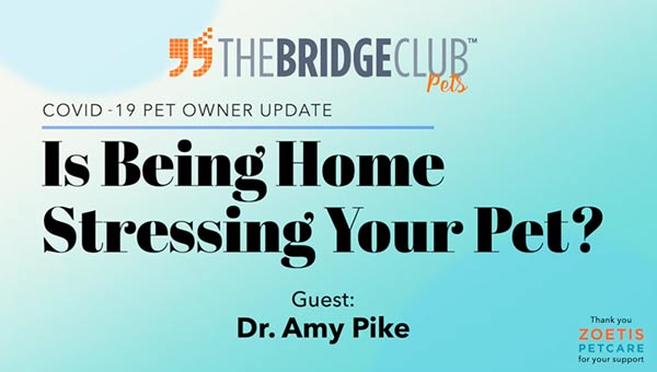 Is being home stressing your pet