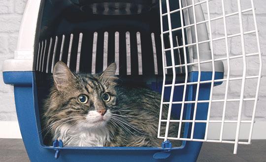 cat sitting in carrier looking out through open door