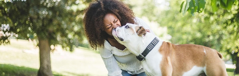 bulldog licking woman's face