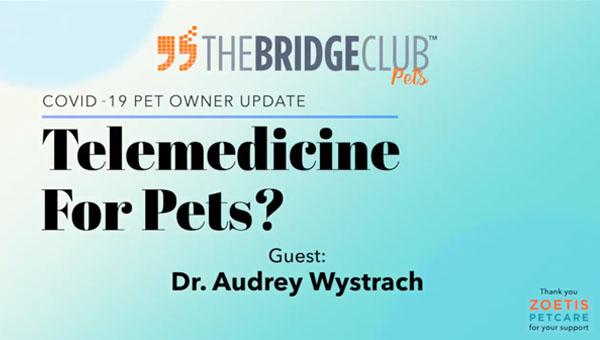 Telemedicine for pets