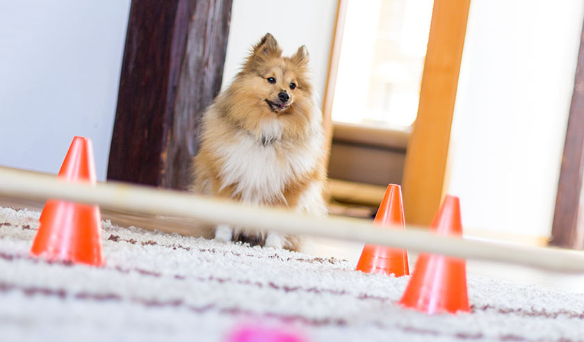 6 Indoor Activities for Dogs to Keep Them Fit in Winter