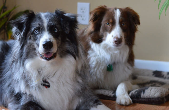 The Importance of Maintaining Your Dog's Vaccines