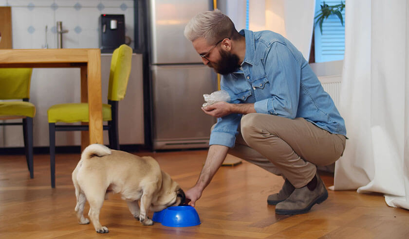 Are You Overfeeding Your Dog or Cat?