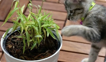 Cat touching fern.