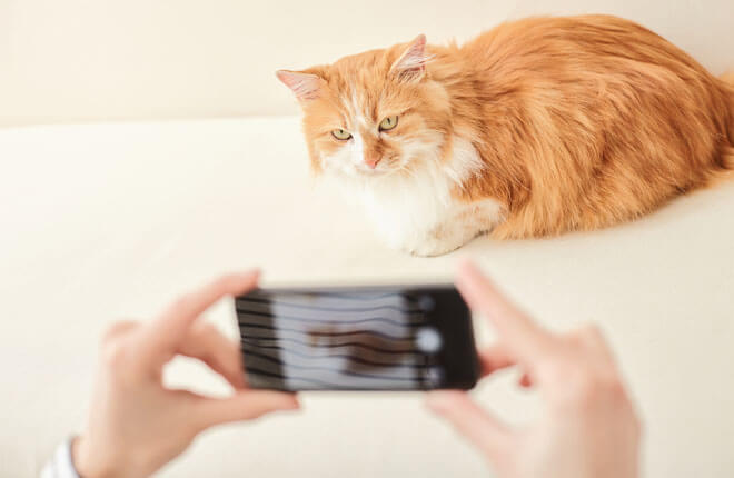 Tips for Taking Videos of Your Cat to Track Their Health