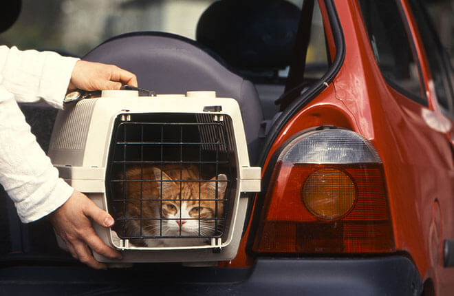 Tips for a Successful Curbside Vet Visit