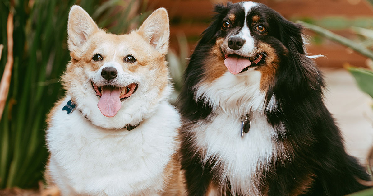 Why Antihistamines May Fail to Control Itch in Dogs