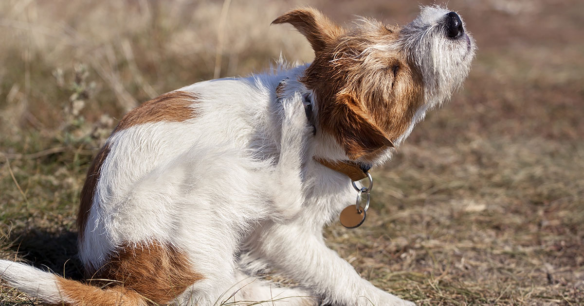 Why is My Dog Itching? | Zoetis Petcare